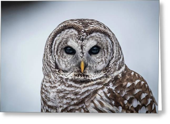 Greeting Card featuring the photograph Barred Owl by Paul Freidlund