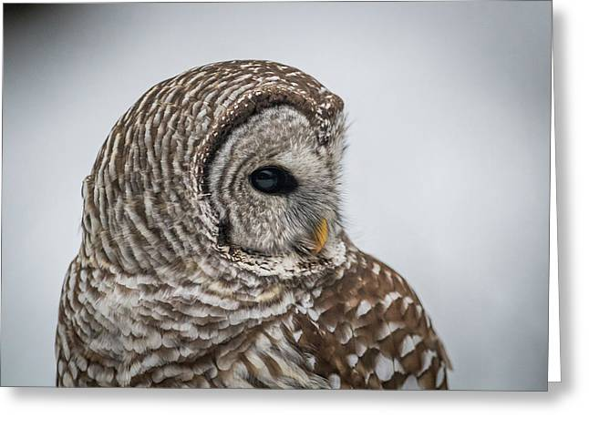 Greeting Card featuring the photograph Barred Owl Portrait by Paul Freidlund
