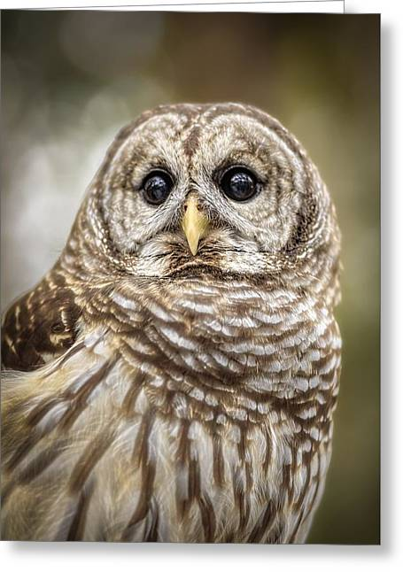 Greeting Card featuring the photograph Hoot by Steven Sparks