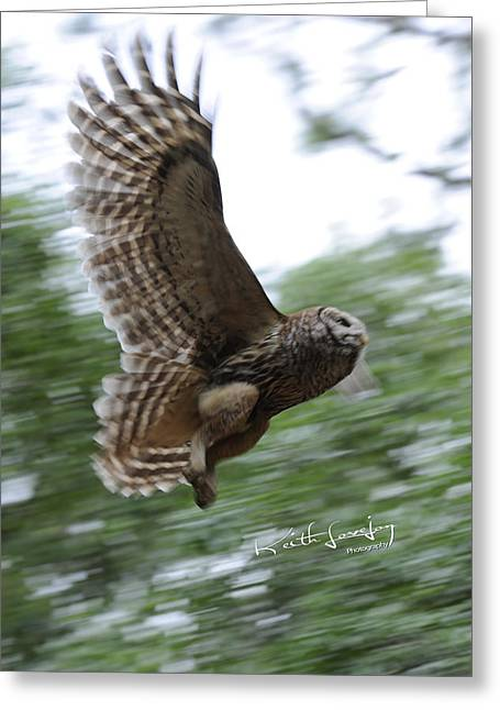Barred Owl Taking Flight Greeting Card by Keith Lovejoy