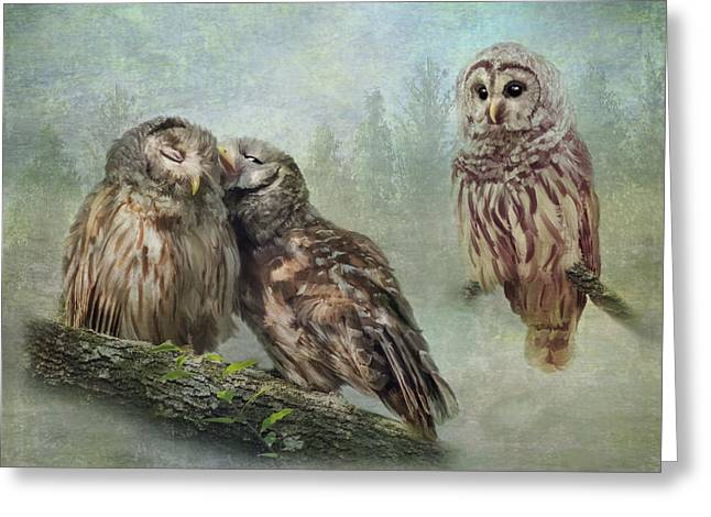 Barred Owls - Steal A Kiss Greeting Card