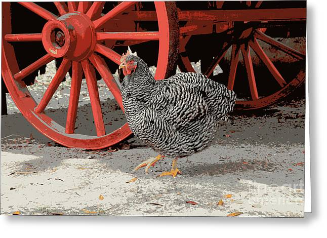 Barred Plymouth Rock Chicken Greeting Card by Catherine Sherman