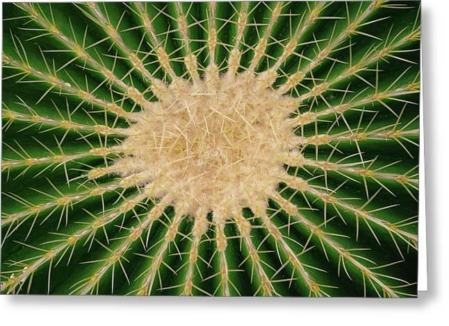 Barrel Cactus No. 6-1 Greeting Card
