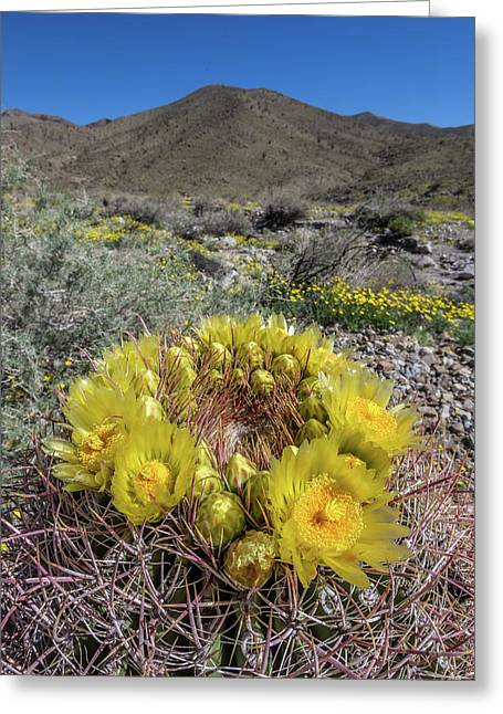 Barrel Cactus Super Bloom Greeting Card by Peter Tellone