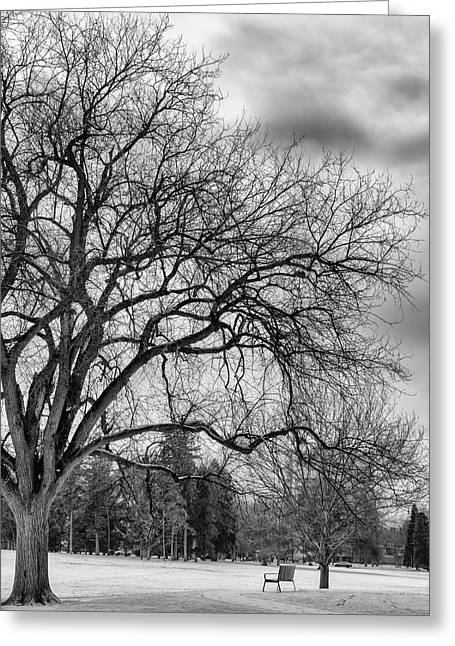 Winter In Cheesman Park, Denver, Co Empty Trees And Empty Benches Greeting Card
