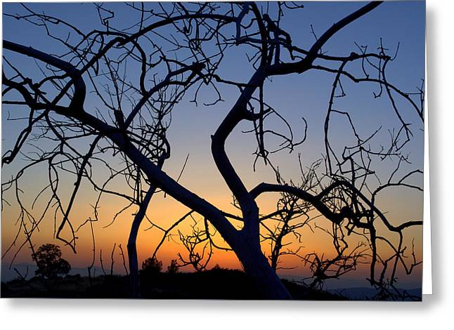 Greeting Card featuring the photograph Barren Tree At Sunset by Lori Seaman