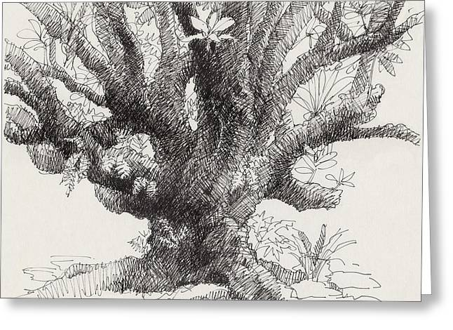 Barringtonia Tree Greeting Card