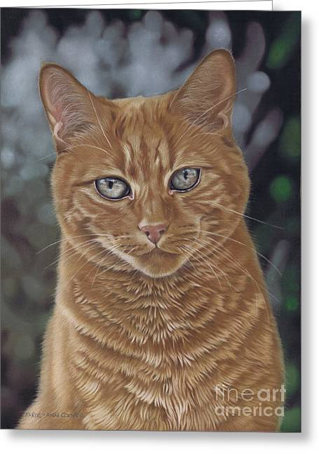 Barry The Cat Greeting Card