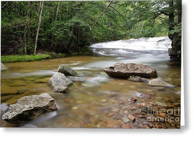 Bartlett Experimental Forest - Bartlett New Hampshire Usa Greeting Card by Erin Paul Donovan