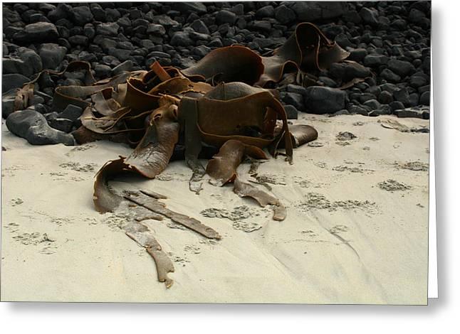 Basalt And Kelp Greeting Card by Terry Perham