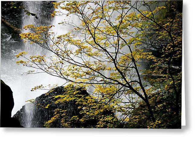 Base Of The Falls. Greeting Card