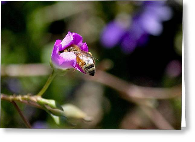 Bashful Bee  Greeting Card