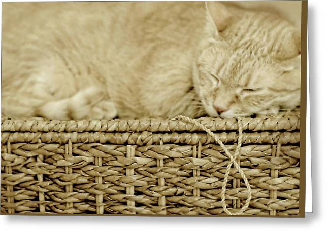 Basket Cat Greeting Card