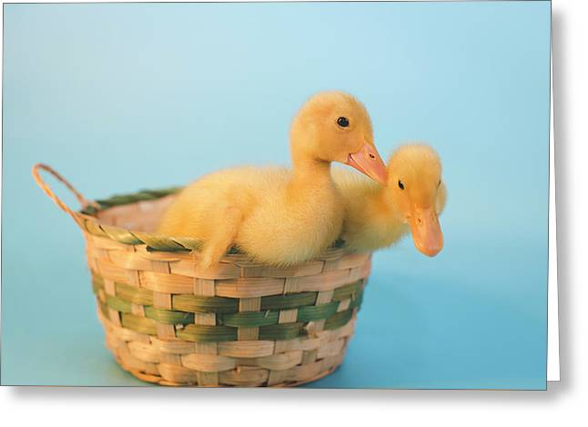 Basket Of Fun Greeting Card