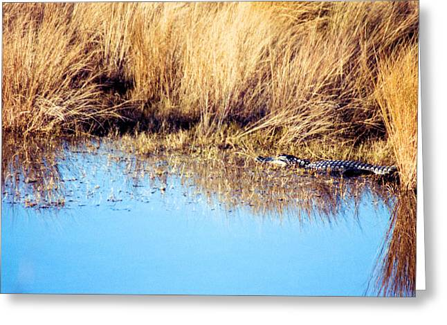 Basking In The Sun Greeting Card by Jan Amiss Photography