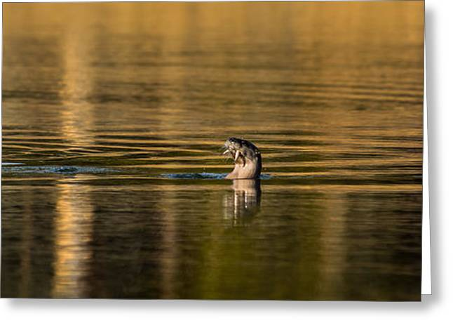 Greeting Card featuring the photograph Basking In The Sunset Light by Yeates Photography