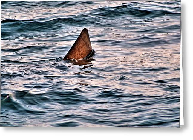 Basking Shark In July Greeting Card