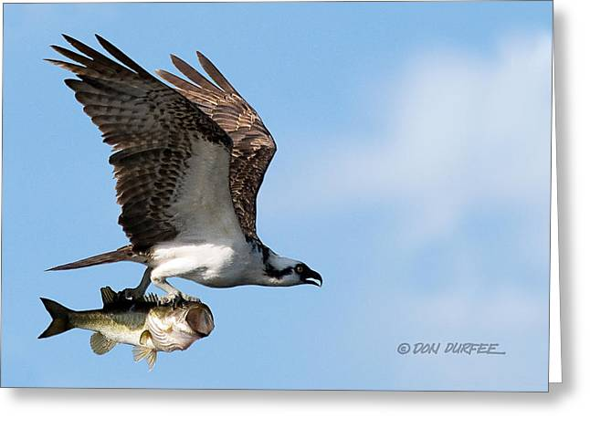 Greeting Card featuring the photograph Bass Master 4 by Don Durfee