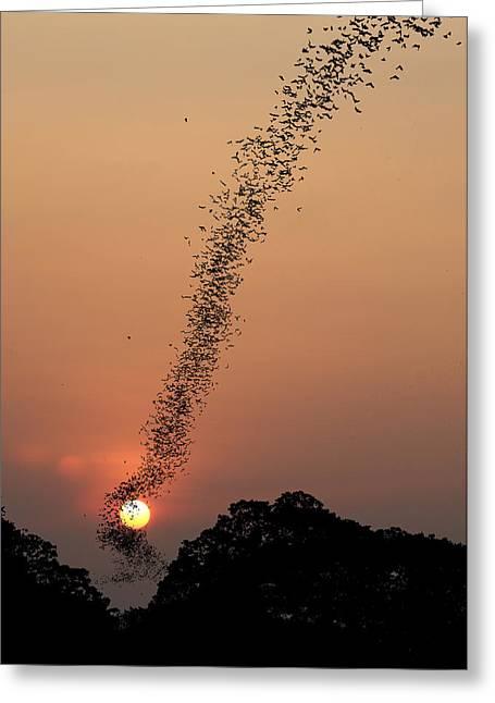 Bat Swarm At Sunset Greeting Card by Jean De Spiegeleer