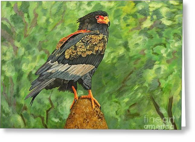 Bataleur Eagle Greeting Card
