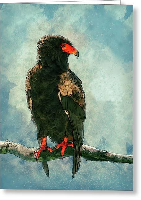 Bateleur Eagle Greeting Card by Jack Zulli