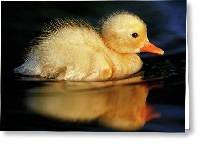 Bath Duckie Greeting Card