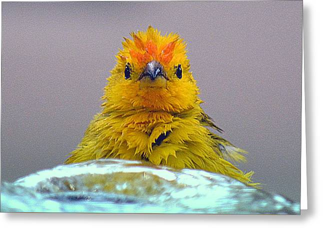 Greeting Card featuring the photograph Bath Time Finch by Lori Seaman