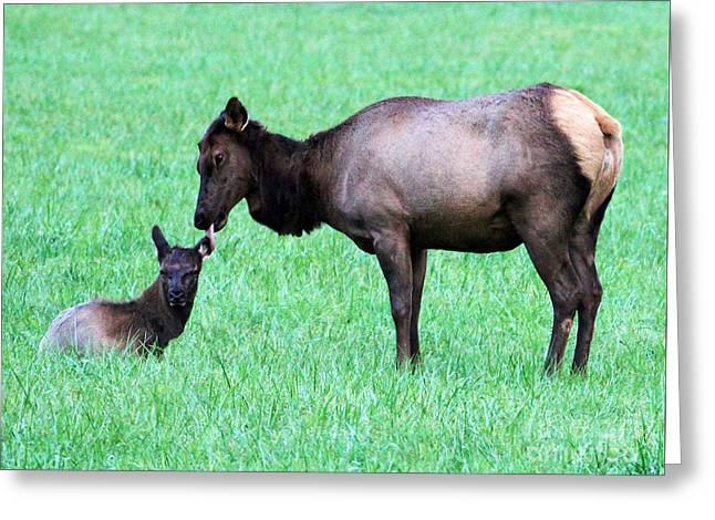 Elk's Bath Time Greeting Card