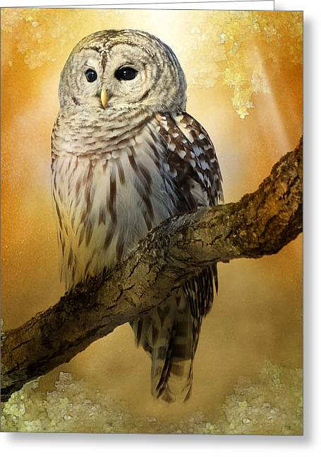 Bathed In Light  Greeting Card by Heather King