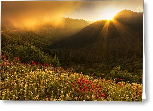 Bathed In Light Greeting Card by Mark Kiver