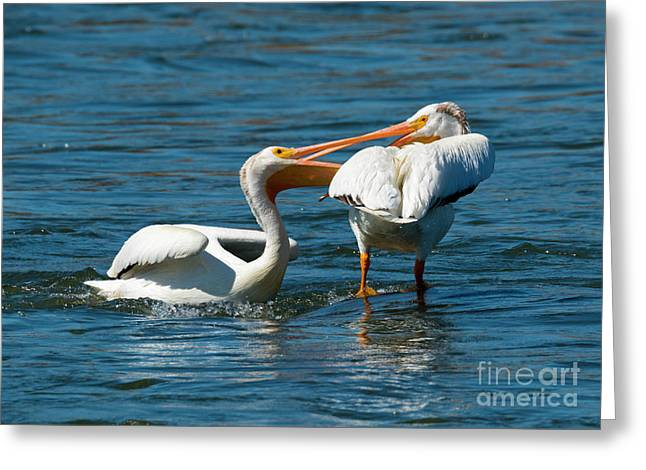 Battle Of The Beaks Greeting Card by Mike Dawson