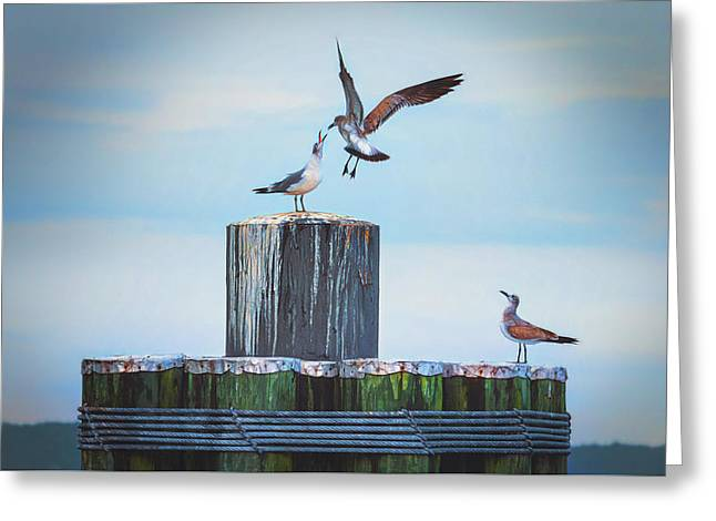 Greeting Card featuring the photograph Battle Of The Gulls by Cindy Lark Hartman