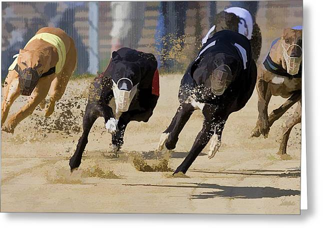 Battle Of The Racing Greyhounds At The Track Greeting Card by Elaine Plesser