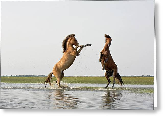 Male Dominated Greeting Cards - Battling Mustangs Greeting Card by Bob Decker