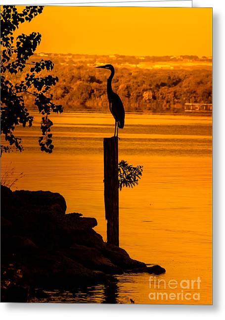 Bay At Sunrise - Heron Greeting Card by Robert Frederick