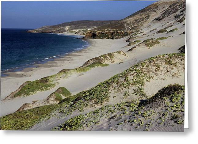 Bay Beach And Sand Dunes Greeting Card by Don Kreuter