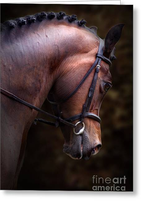 Brown Horse Photographs Greeting Cards - Bay Horse Head Greeting Card by Ethiriel  Photography