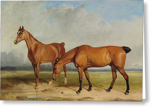Bay Hunter And Chestnut Mare In A Field Greeting Card