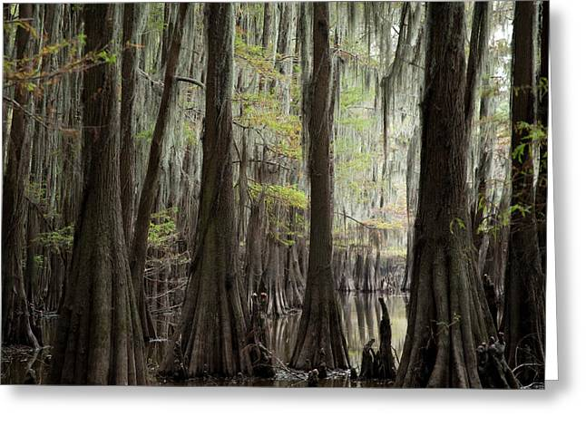 Bayou Trees Greeting Card