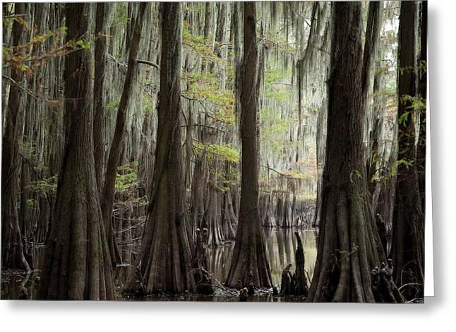 Bayou Trees Greeting Card