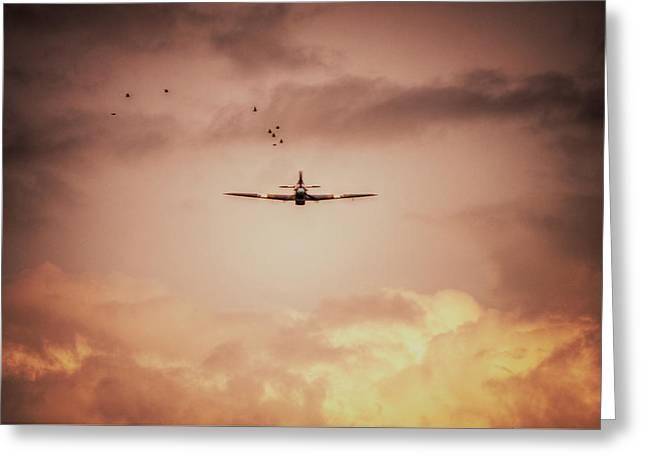 Bbmf Hurricane And Birds Greeting Card by Nigel Bangert