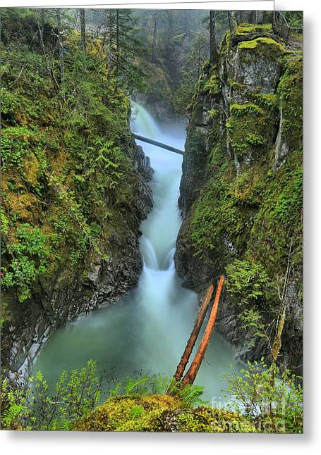 Bc Rainforest Canyon Greeting Card