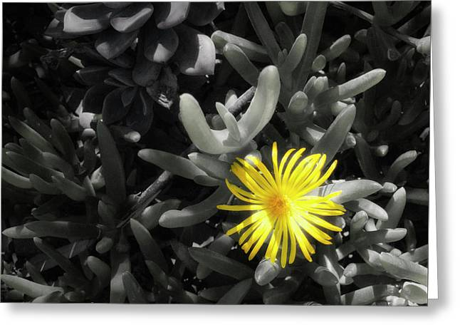 Greeting Card featuring the photograph Be Different by Lynn Geoffroy
