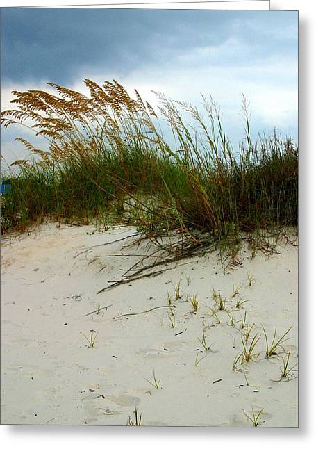 Beach   Grass   And  Sky Greeting Card