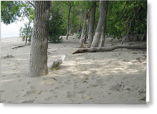 Beach At The Lake Greeting Card