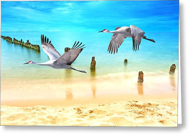 Beach Beauties Greeting Card