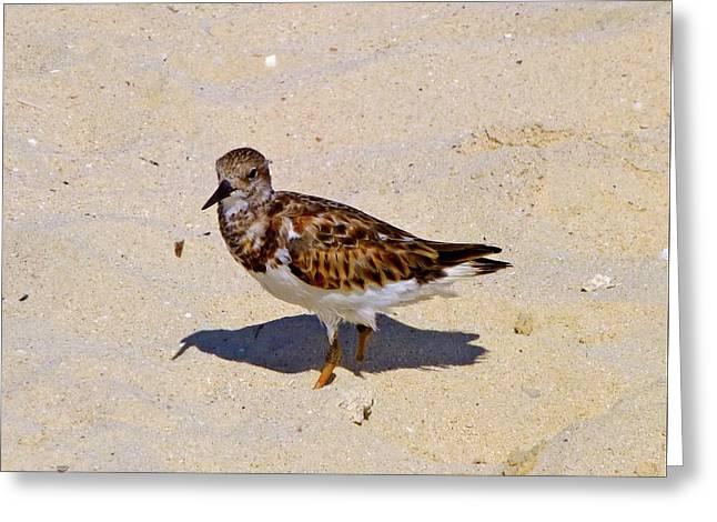 Greeting Card featuring the photograph Beach Bird by Francesca Mackenney