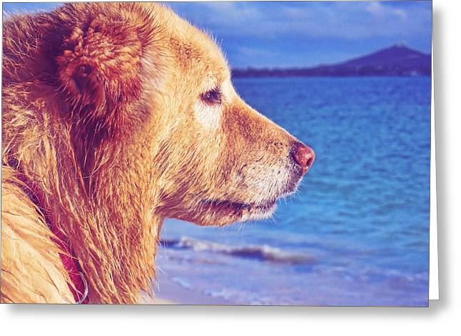 Beach Buddy  Greeting Card by JAMART Photography