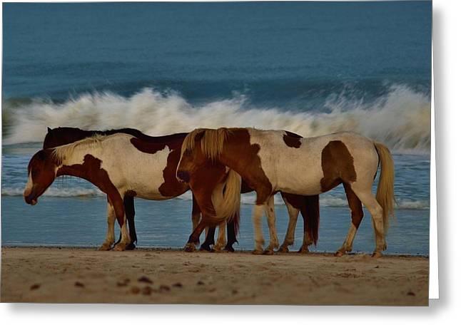Beach Bum Ponies Greeting Card