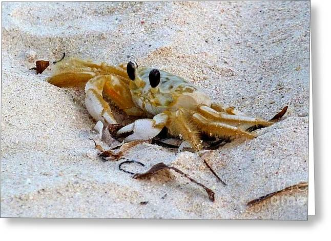 Beach Crab Greeting Card